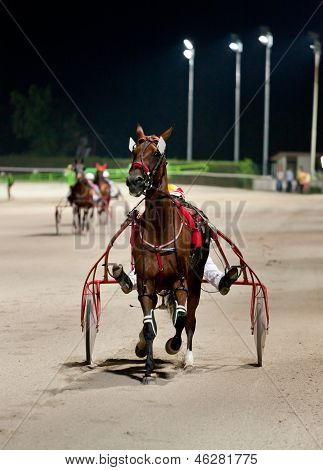 Training Trotters Race In Hippodrome