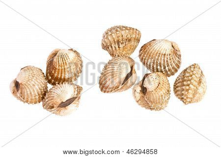 Cockles On White