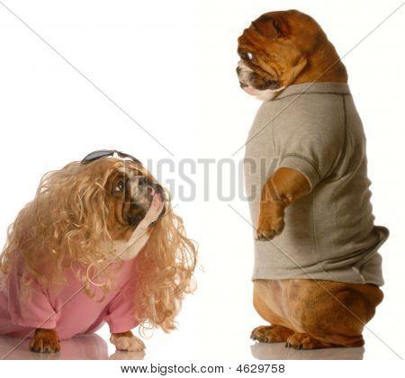 Bulldog Standing Looking Down At Girl