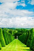 image of chateau  - conical hedges lines and lawn Versailles Chateau France - JPG