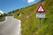picture of marmot  - Marmots warning sign by an alpine road - JPG