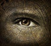 stock photo of human eye  - Aging or ageing concept with an open human eye on a wood grain texture of old tree rings as a health care and medical idea of getting older and the changes or decline in function in a person over time - JPG