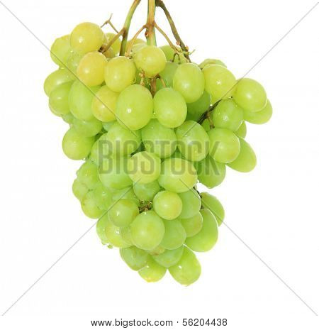 Fine green grapes. All on white background.