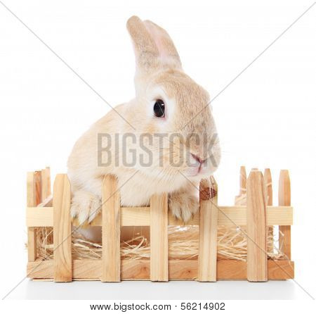 Cute dwarf rabbit in hutch. All on white background.