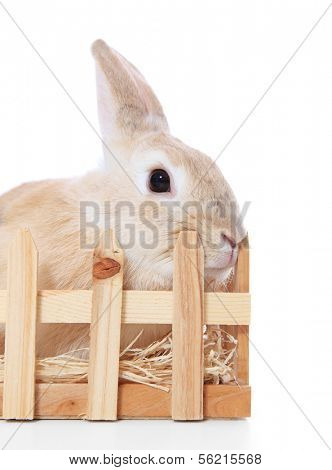 Dwarf rabbit in hutch. All on white background.