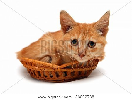 wretched red small cat in basket isolated on white