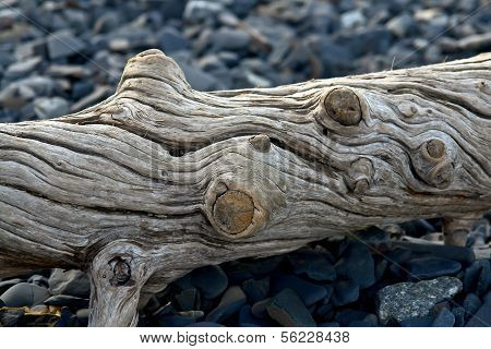 Old Log Ejected  On The Sea Shore.