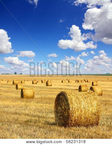landscape with harvested bales of straw in field