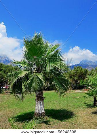 Palma, Turkey
