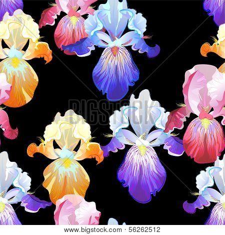 Seamless Black Background with Iris Flowers