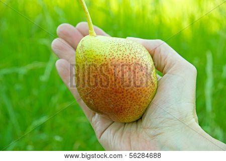 A sun-ripened Pear