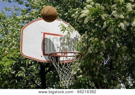 Basketball and spring blossoms