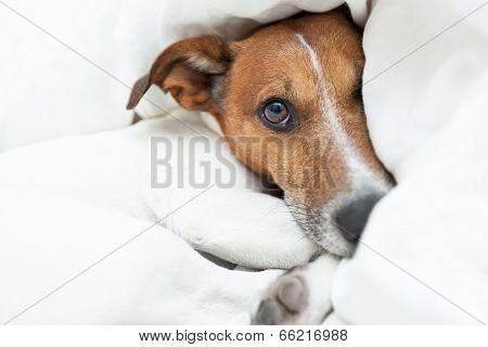 Dog Awake