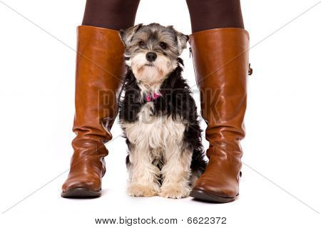 Dog between boots