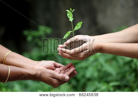 Holding A Plant Between Hands
