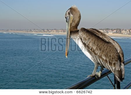 Pelican on Rail