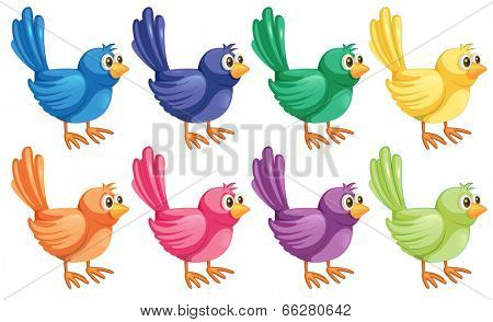Illustration of the eight colorful birds on a white background