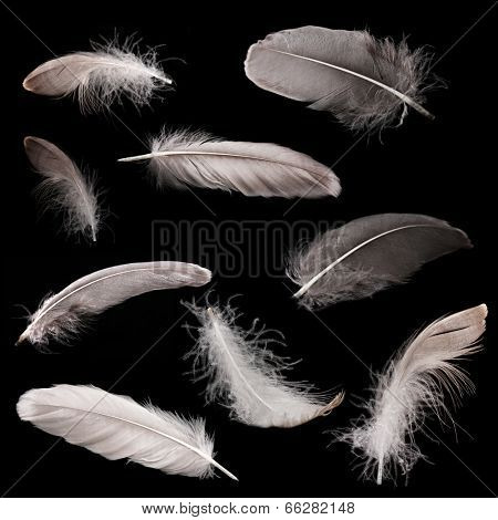 Collage of feathers on black background