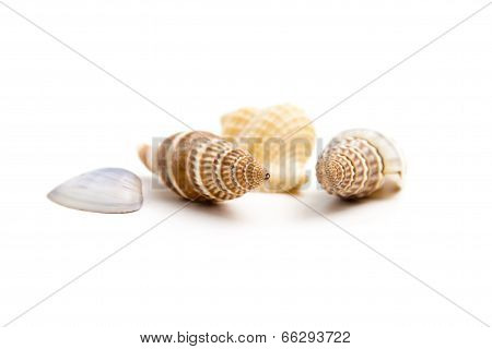 Shells of marine crustaceans