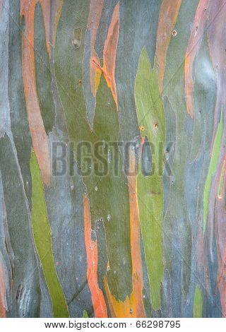 Abstract Tree Bark Background