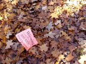 stock photo of hayride  - Pink warning sign laying in fall leaves about a hayride tractor possibly coming along the trail - JPG