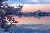 stock photo of thomas jefferson memorial  - Thomas Jefferson Memorial and Tidal Basin at dawn surrounded by blossoming cherry trees in Washington DC - JPG