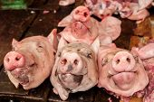 pic of pig head  - Raw fresh heads of organic pig for sale at asian food market - JPG