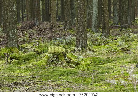 Forest With Moss-covered Stub