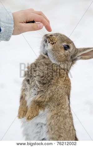 Young girl and cute hare outdoor in the snow