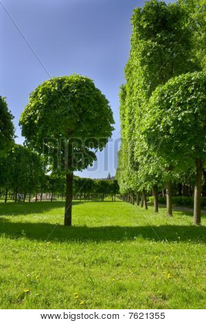 Avenue Of Trees In Well-groomed Park.