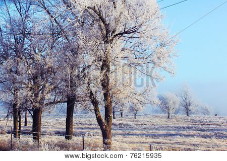 Trees under the weight of winter ice