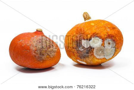 Rotten Pumpkins Isolated On White Background