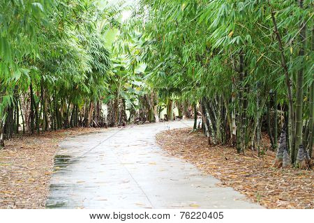 Path Bamboo