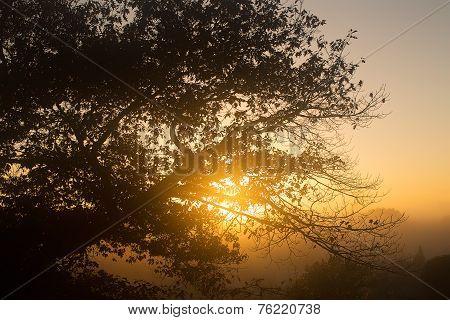 Sunrise Hamilton Nz