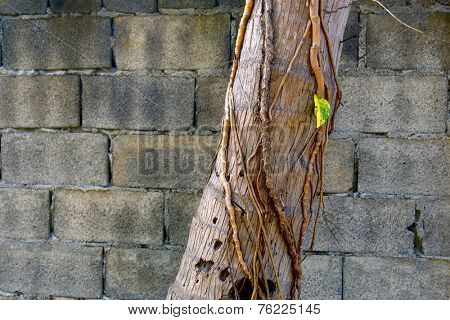 Palm trunk overgrown with vines on brick wall background