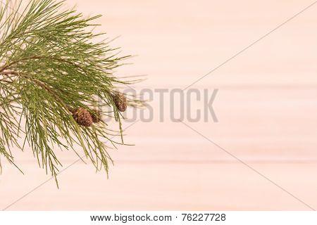 Fresh Pinecones Over Paulownia Wooden Background