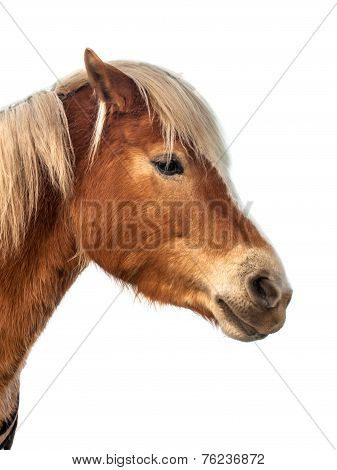 Brown Horse Head With Clipping Path