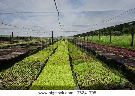 Farming Vegetable Hydroponics