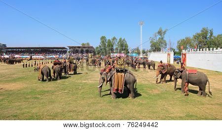 Elephant army prepare to start fighting in Surin Elephant Round-up 2014