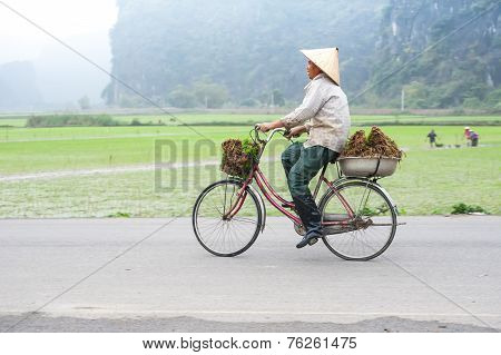 Vietnamese Woman At Conical Hat On Bicycle Going For Work At Rice Field. Organic Agriculture At Sout