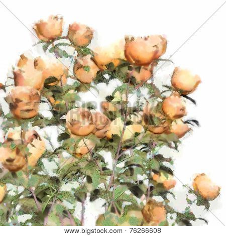 Flower Watercolor Roses Bush