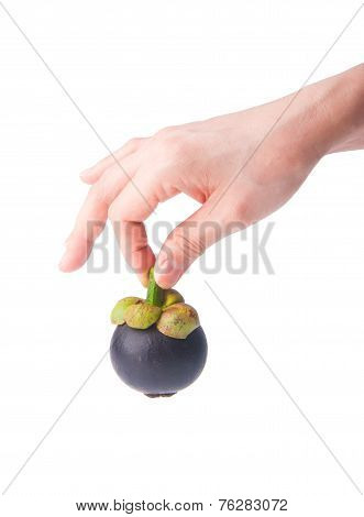 Mangosteen In Hand On Background.