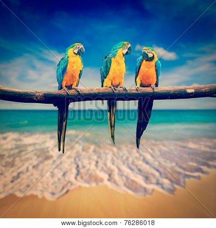 Vintage retro effect filtered hipster style image of  tropical vacation concept - three parrots (Blue-and-Yellow Macaw (Ara ararauna) aka the Blue-and-Gold Macaw) on tropical beautiful beach and  sea