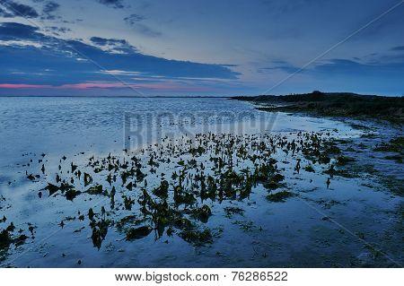 Sea And Beach In Camargue