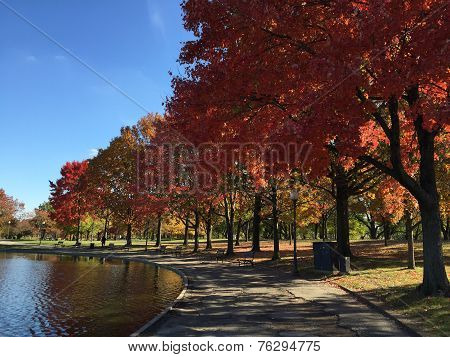 Fall Foliage in DC