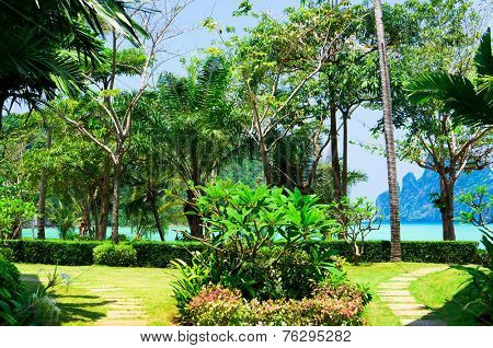 Branches Overhanging Exotic Paradise