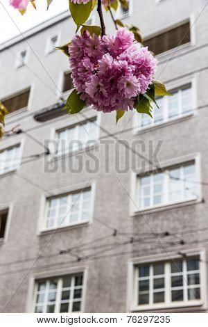 a flowering tree in front of the gray facade of an apartment building