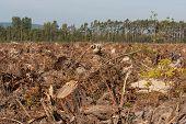 picture of deforestation  - deforestation in Bavaria - JPG