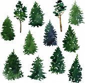 picture of redwood forest  - set of conifer trees drawing by watercolor - JPG
