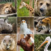 stock photo of zoo animals  - a collage photo of some wild animals - JPG